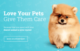 35 Best WordPress Themes for Pets,Animal and Vets 2017